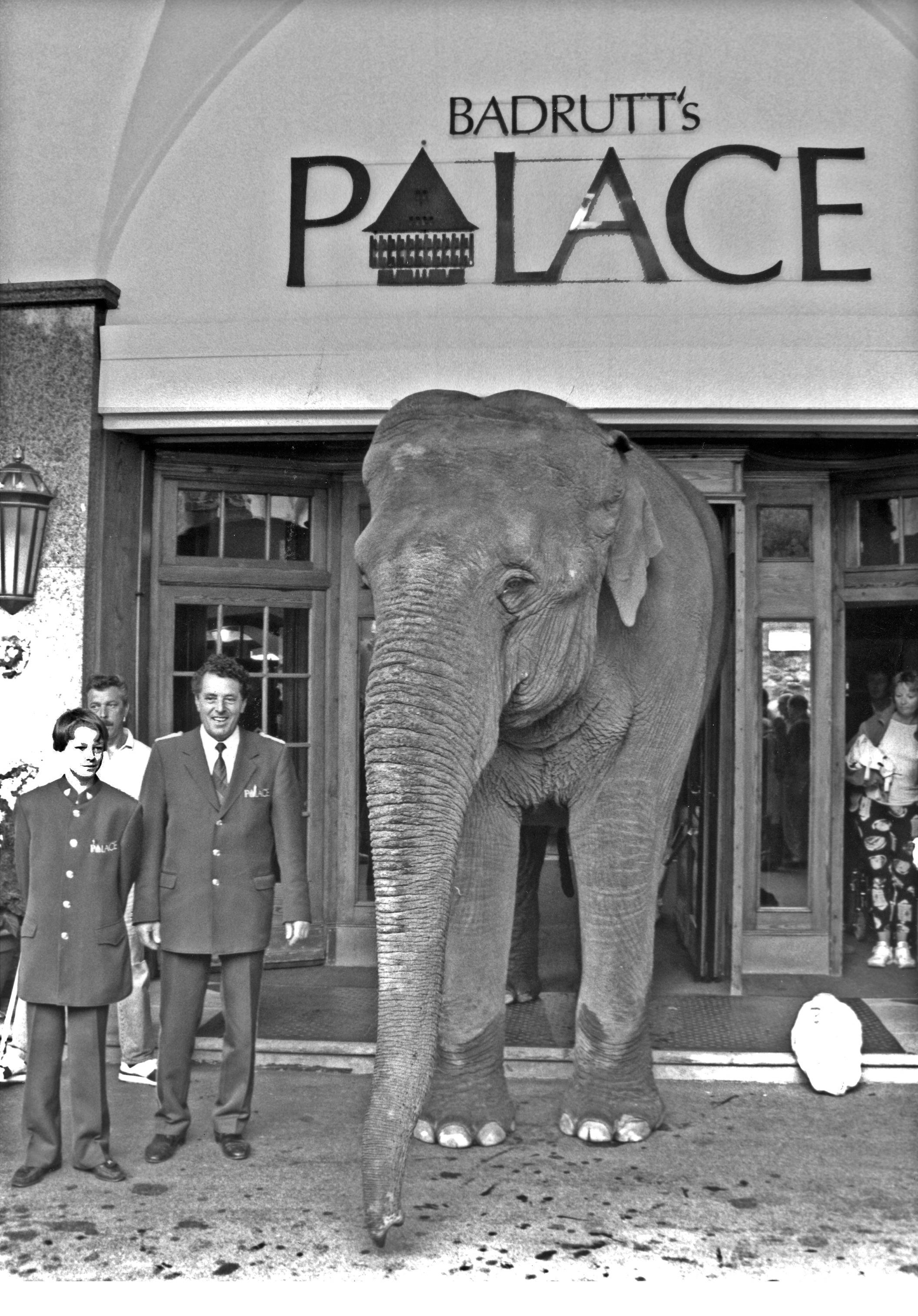 History_Elefant_H_01-1