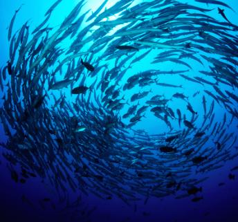 LAMER BlueHeart Dive